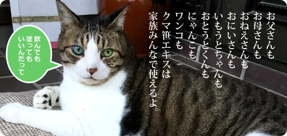 猫用クマ笹エキス