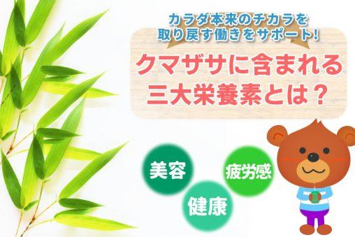 熊笹に含まれる三大栄養素