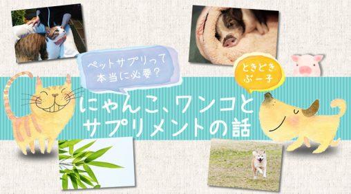 犬猫とサプリメント